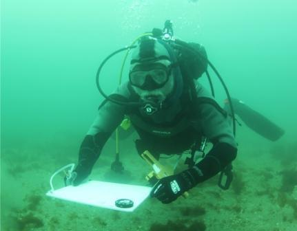 March 29, 2013. Dive Safety Officer Gerry Smith surveys the bottom of Cat Harbor Catalina as part of the permitting process for a new USC aquaculture facility for growing oysters. Photo by the author.
