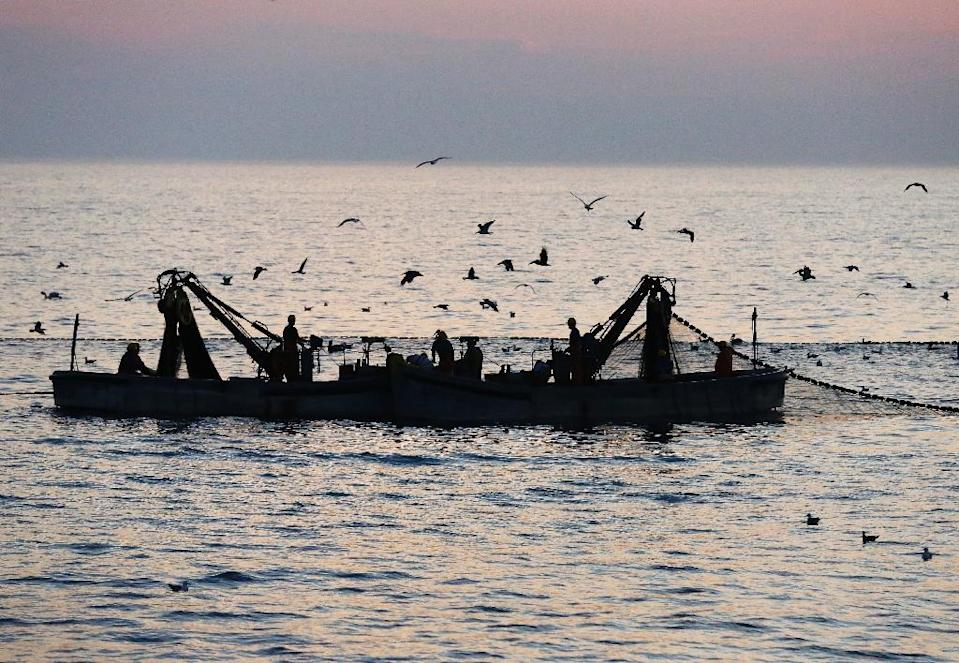 In a new report, WWF cautioned that over-fishing, pollution and climate change had significantly shrunk the size of commercial fish stocks between 1970 and 2010 (AFP Photo/Andrew Caballero-Reynolds)