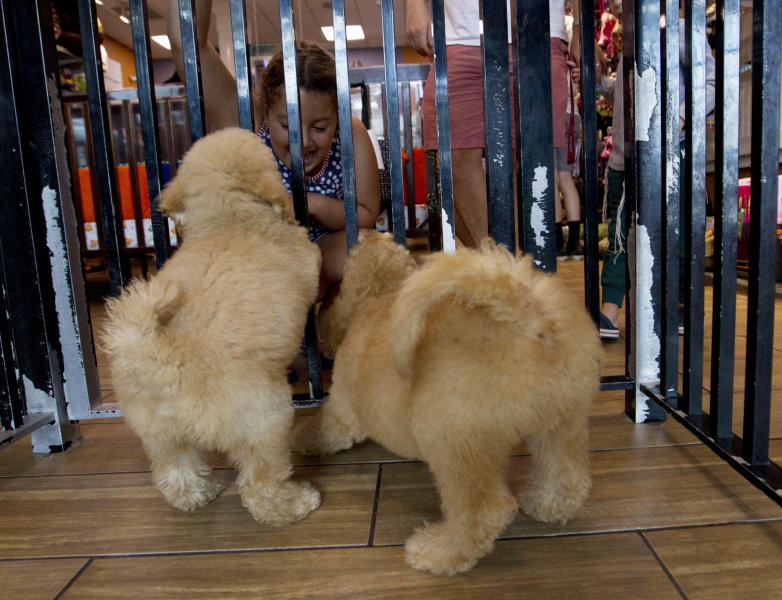 "People watch puppies playing in a cage at a pet store in Columbia, Md., Monday, Aug. 26, 2019. Pet stores are suing to block a Maryland law that will bar them from selling commercially bred dogs and cats, a measure billed as a check against unlicensed and substandard ""puppy mills."" (AP Photo/Jose Luis Magana)"
