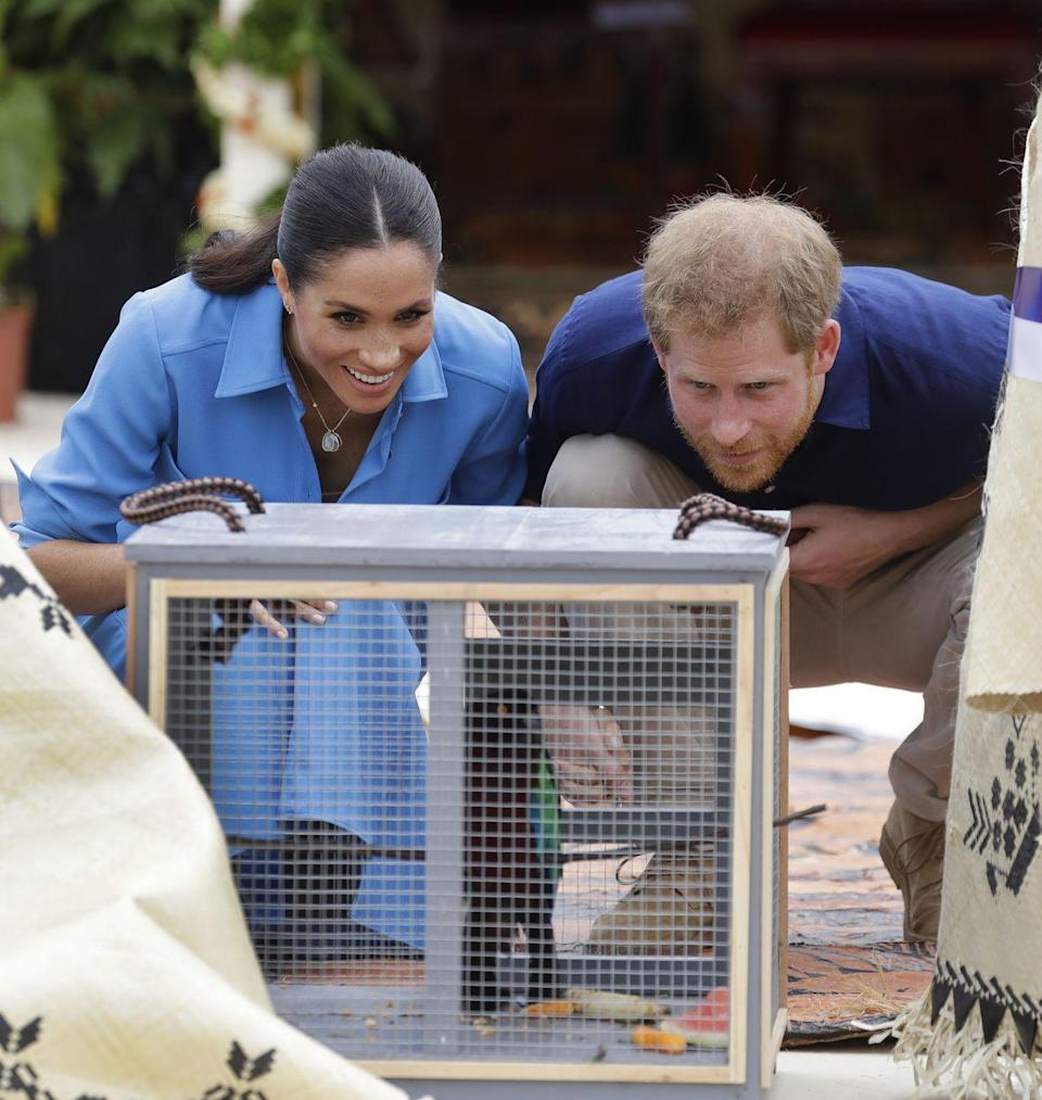 <p>The couple looked into a cage to see a small parrot. Could the pair be thinking of adding a new pet to their family? </p>
