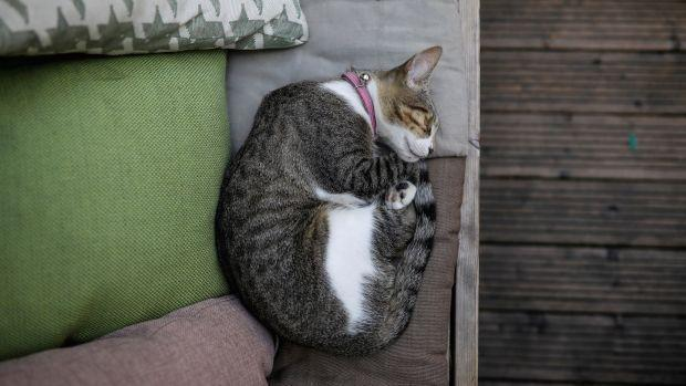 cat curled up napping