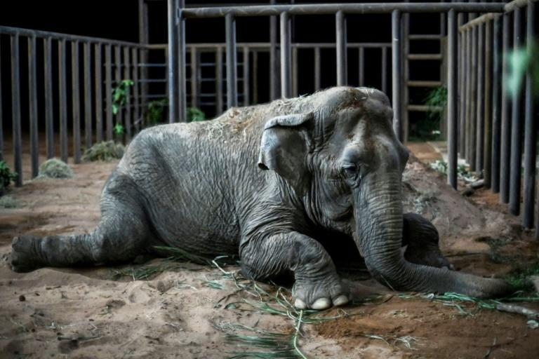 Worldwide, abot 40 countries have fully or partially banned the use of wild animals in circuses (AFP Photo/Rogerio Florentino)