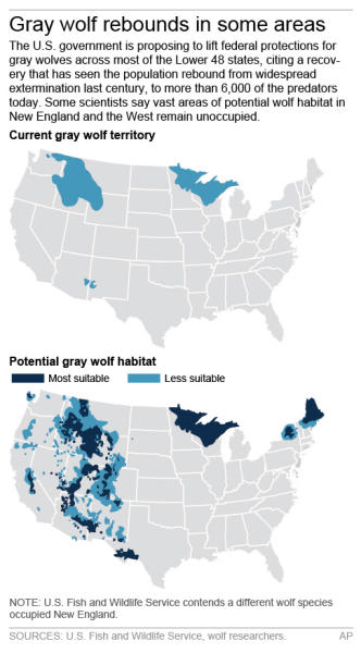 Maps show the current population and potential habitat for Gray wolves in North America