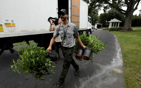 A U.S. National Park Service gardener carries plants from a truck for planting at the White House in Washington - Credit: Reuters