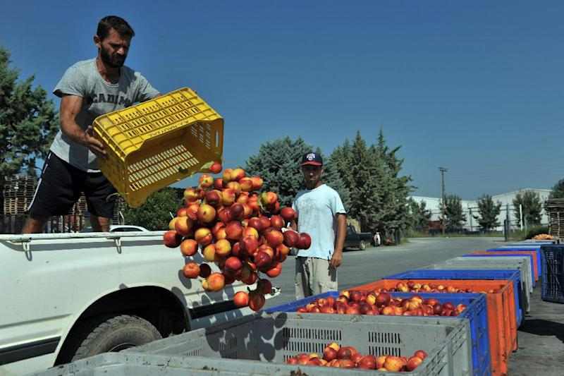 A farmer throws peaches into boxes at an agricultural co-op on August 12, 2014 in Veria, Greece