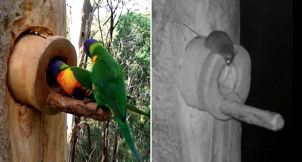 Screenshots of footage which shows native animals using the man-made hallows. Source: NSW Government