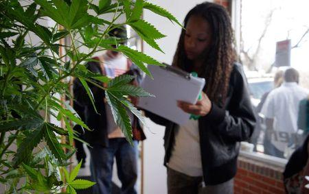 A woman looking for work in the cannabis industry fills out a form in front of a marijuana plant at the CannaSearch job fair in downtown Denverin this file photo