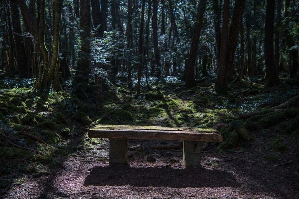 """<p>Also known as Suicide Forest, Aokigahara lies at the bottom of Mount Fuji in Japan. There have been more than 500 reported suicides in the forest since the 1950s, <em><a href=""""https://www.bbc.com/travel/article/20121203-worlds-most-haunted-forests"""" rel=""""nofollow noopener"""" target=""""_blank"""" data-ylk=""""slk:BBC"""" class=""""link rapid-noclick-resp"""">BBC</a></em> reports. Some people say it's because of big underground deposits of iron that interfere with compasses and make people get lost. Others blame the forest's association with demons in Japanese mythology. Who knows what spirits are lurking?</p>"""
