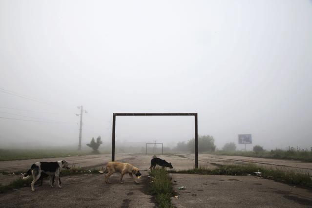 Dogs walk past a goalpost on a foggy morning in the town of Lipljan June 3, 2014. The 2014 Brazil World Cup opens on June 12 and fans around the globe are gearing up for the big tournament. But soccer lovers are not only preparing to watch the world's best professional players battle it out on the pitch; they are also out there kicking a ball about themselves. Reuters photographers on every continent, in countries from China to the Czech Republic, went out to capture images of soccer goalposts used by players to practise the 'beautiful game'. Picture taken June 3, 2014. REUTERS/Hazir Reka (KOSOVO - Tags: SPORT SOCCER WORLD CUP SOCIETY ANIMALS TPX IMAGES OF THE DAY) ATTENTION EDITORS: PICTURE 30 OF 60 FOR PACKAGE '2014 WORLD CUP - AROUND THE WORLD IN 60 GOALS' TO FIND ALL IMAGES SEARCH 'GLOBAL GOALPOSTS'