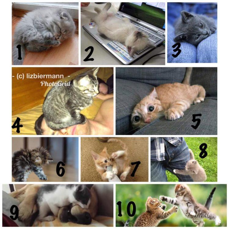 cats alternative pain scale options
