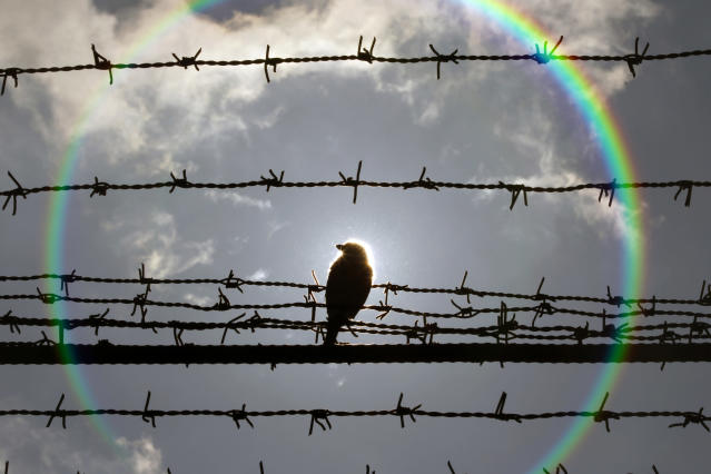 A bird is perched on barbed wire that surrounds the Jilava prison near Bucharest February 28, 2013. A visit to the prison, part of a conference on drug abuse in prisons and its relation to the rise of HIV-AIDS, was organized to meet inmates who are part of a project in which they receive therapeutic help to overcome their problems with narcotics. The conference is organized by the Council of Europe and Romania's National Anti-drug Agency. REUTERS/Bogdan Cristel (ROMANIA - Tags: TPX IMAGES OF THE DAY HEALTH DRUGS SOCIETY CRIME LAW) - RTR3EEJ7