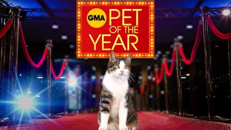 GMA Pet of the Year Contest - Official Rules