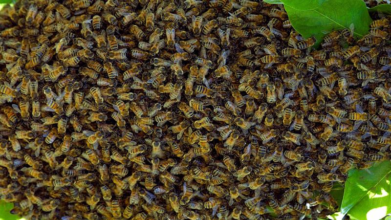 NT car crash victim attacked by bee swarm