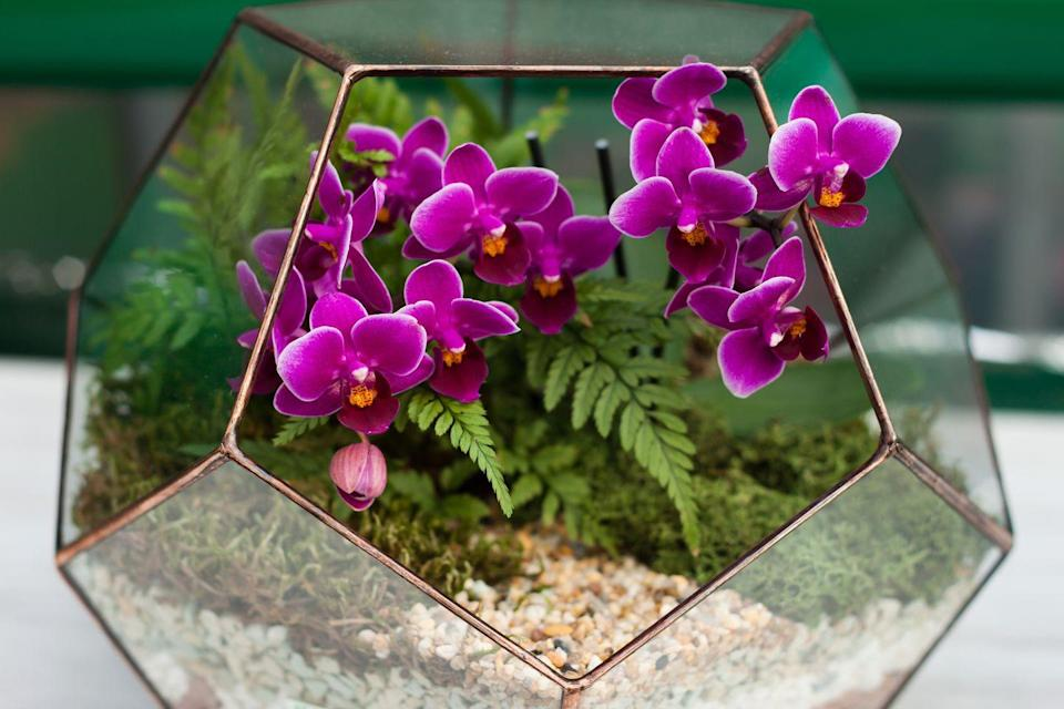 """<p>Phalenopsis Orchids don't deserve a bad reputation for being fussy because they're pleasantly forgiving. They'll continue to bloom for months — years, even — as long as you give them bright, indirect light and water each week. </p><p><a class=""""link rapid-noclick-resp"""" href=""""https://www.amazon.com/Just-Add-Ice-JAI203-Orchid/dp/B07Q6ZT5H6/?tag=syn-yahoo-20&ascsubtag=%5Bartid%7C10055.g.32440507%5Bsrc%7Cyahoo-us"""" rel=""""nofollow noopener"""" target=""""_blank"""" data-ylk=""""slk:SHOP ORCHID"""">SHOP ORCHID</a></p>"""