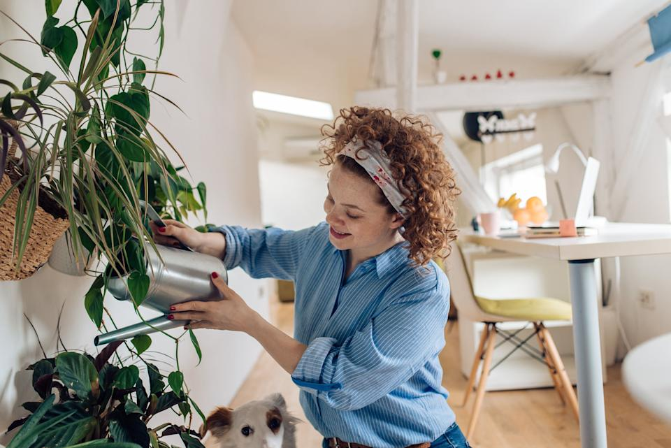 If you can't go outside, bring the outdoors in with these affordable delivery services for indoor plants. (Photo: RgStudio via Getty Images)