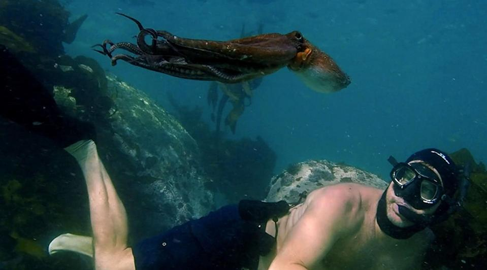 """<p><strong>Nominated for:</strong> Best Documentary Feature (Pippa Ehrlich, James Reed and Craig Foster)</p> <p><strong>What it's about:</strong> A diver learns a lesson in empathy from an unlikely source: an octopus.</p> <p><strong>Where to watch:</strong> <a href=""""https://cna.st/affiliate-link/PLjJJwDSy2PWcDVzhQJisyu3kKhovZsrjpbLPD3hPnEpF3j7nL9giRvSefKGLAFbARYV2UzMvRwvFffFhPmKV63s41n4DuXrP2x1AJQeY?cid=607c87d348c995b3b00ffc42"""" rel=""""nofollow noopener"""" target=""""_blank"""" data-ylk=""""slk:Stream now on Netflix"""" class=""""link rapid-noclick-resp"""">Stream now on Netflix</a></p>"""