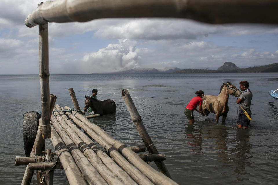 In this Jan. 14, 2020, photo, men clean their horses that they rescued from Taal volcano island in Balete, Batangas province, southern Philippines. So far no one has been reported killed in the eruption, but the disaster is spotlighting the longstanding dilemma of how the government can move settlements away from danger zones threatened by volcanoes, landslides, floods and typhoons in one of the world's most disaster-prone countries. (AP Photo/Basilio Sepe)
