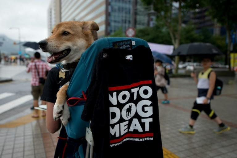 According to a survey last year, 70 percent of South Koreans do not eat dogs, while 40 percent believe the practice should be banned
