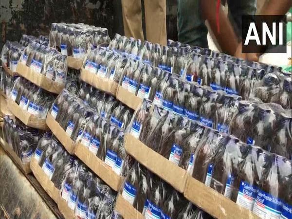 Over 1000 bottles of Escaf cough syrup were seized in Chandrapur, Tripura