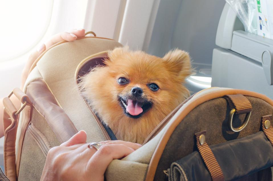 Airlines are banning emotional support animals thanks to a Department of Transportation revision. (Photo: Getty Images stock photo)