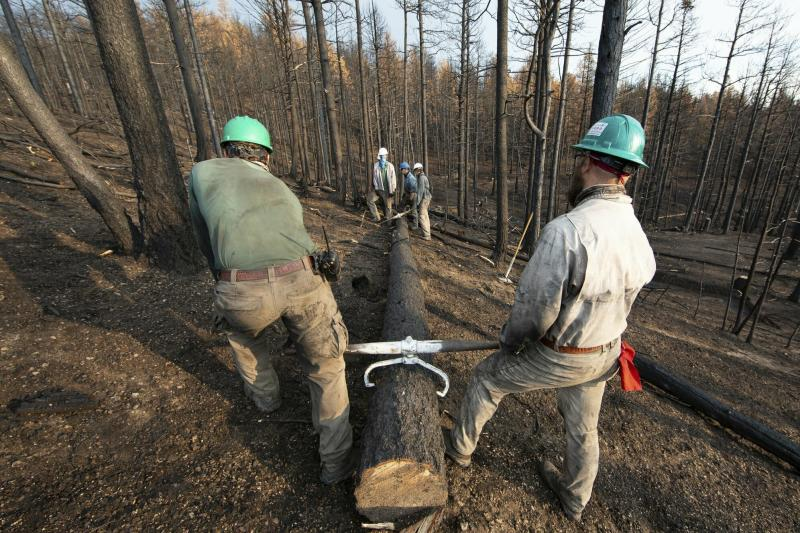 This undated photo provided by the Philmont Scout Ranch shows members of the Philmont Recovery Corps moving a log into place for a new contour along a charred slope. The historic ranch near Cimarron, New Mexico, is rebuilding following a devastating wildfire that burned nearly 44 square miles in 2018. Backcountry trails were wiped out along with trail camps. (Philmont Scout Ranch via AP)