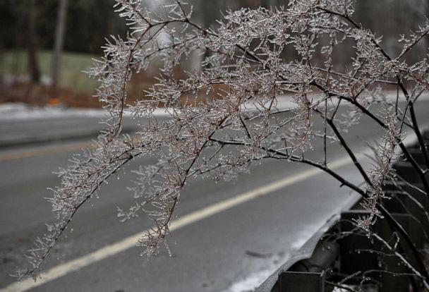 PHOTO: Ice forms on branches during the inclement weather in Rutland, Mass., Dec. 30, 2019. A combination of freezing rain and snow has hit parts of northern New England. (Christine Peterson/Worcester Telegram & Gazette via AP)