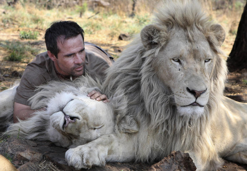 """In this photo taken Monday Oct. 11, 2010, Kevin Richardson, a.k.a. the Lion Whisperer lays with two of his lions in their enclosure at the Kingdom of the White Lion park in Broederstroom, near Johannesburg South Africa. A new film opening in the United States on Friday about a rare white lion who escapes becoming a trophy on a wall is a rare happy ending in a country where more than 1,000 lions are killed legally each year.Kevin Richardson, the man behind the movie, calls himself an """"ambassador of lions"""" and hopes the film will act as one too at a time when foreign tourists are willing to pay up to $40,000 to shoot a big cat.(AP Photo/Denis Farrell)"""