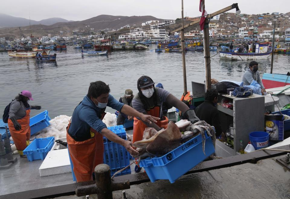 Workers move a box of freshly caught squid in Pucusana, Peru, Monday, Sept. 20, 2021. To compete with the Chinese, the local fishermen of Pucusana assume ever-greater risks, venturing farther out from home and spending as much as a week at sea to haul in what they used to catch in a single day close to shore. (AP Photo/Martin Mejia)