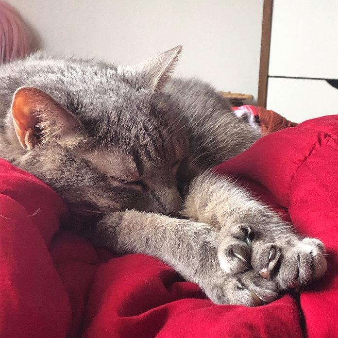 Cats are great at naps, something probably filling your calendar more and more by the day. | Courtesy