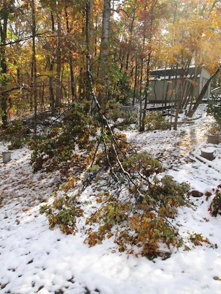 This image taken on Oct. 30, 2011shows damaged trees from a mid-October storm that packed wet, heavy snow that struck portions of Virginia's Shenandoah Valley while trees were still leafed out, damaging or topping a great many that couldn't carry the load. This tree couldn't be saved and had to be removed. (AP Photo/Dean Fosdick)