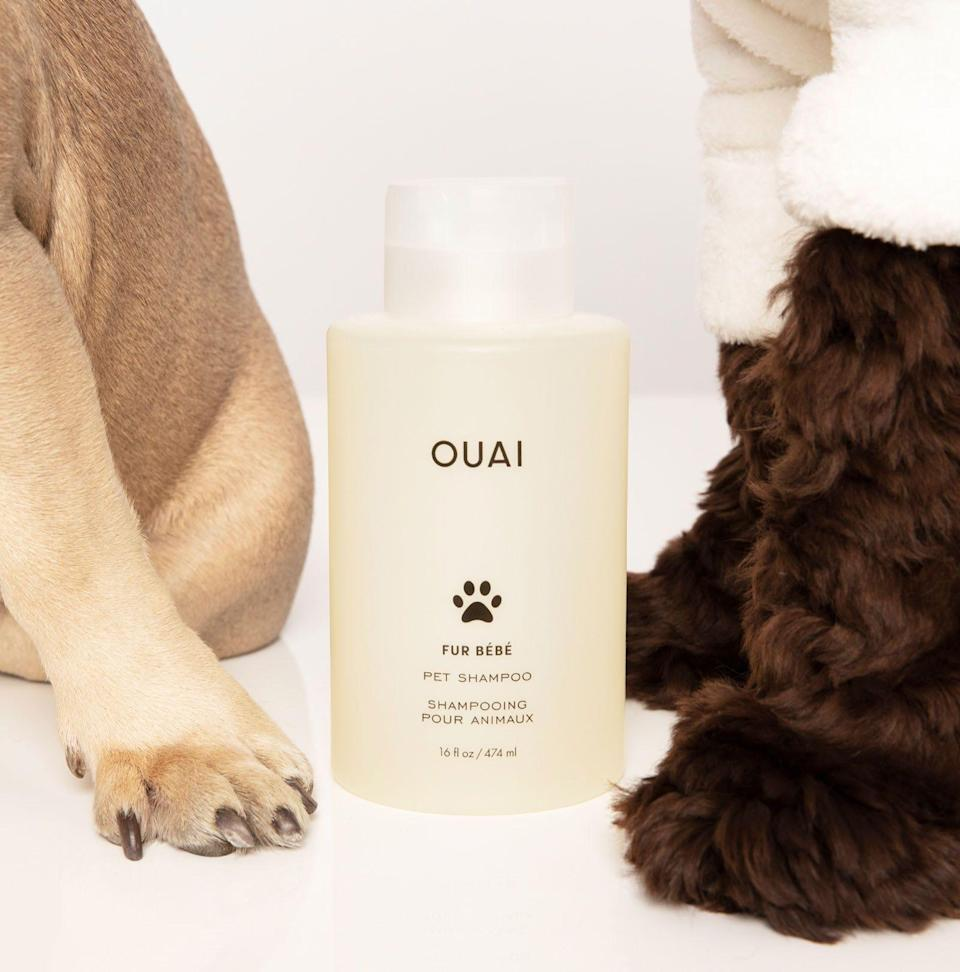 """<p><strong>OUAI </strong></p><p>ulta.com</p><p><strong>$32.00</strong></p><p><a href=""""https://go.redirectingat.com?id=74968X1596630&url=https%3A%2F%2Fwww.ulta.com%2Ffur-bebe-pet-shampoo%3FproductId%3Dpimprod2023962&sref=https%3A%2F%2Fwww.thepioneerwoman.com%2Fhome-lifestyle%2Fpets%2Fg36563635%2Fbest-dog-shampoo%2F"""" rel=""""nofollow noopener"""" target=""""_blank"""" data-ylk=""""slk:Shop Now"""" class=""""link rapid-noclick-resp"""">Shop Now</a></p><p>If you wish you could wash your dog with your favorite human shampoo, this is the next best thing. Celebrity hairstylist and OUAI founder Jen Atkin launched OUAI pet shampoo to offer dogs a luxurious cleansing experience. It's gentle, promotes a shiny coat, and is formulated with a light, refreshing fragrance that won't irritate your pup's sensitive nose.</p>"""
