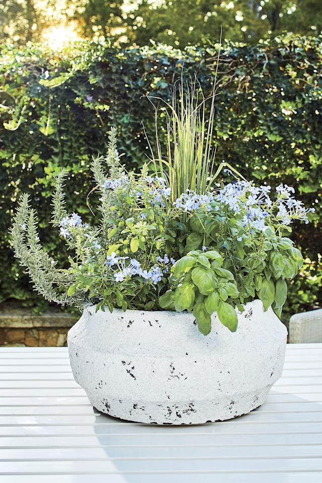 <p>Rethink your porch planting with a container that proves there's elegance and purpose in simplicity. Fragrant rosemary, basil, and lemon grass accent soft blue plumbago in this tabletop setup. The best part? While the scent appeals to garden party guests, it could also help keep pests at arm's length. Start with a young <strong>lemon grass</strong> plant positioned in the center of the pot. Then add the flowering <strong>plumbago</strong> around that. On the outermost edges, fill in the gaps with <strong>basil</strong> and <strong>rosemary</strong>, alternating the two if you wish or placing them on opposite sides of the container.</p> <p>Clip (and use!) the basil frequently. This will help it grow and also keep it from overtaking the rest of the display.</p>