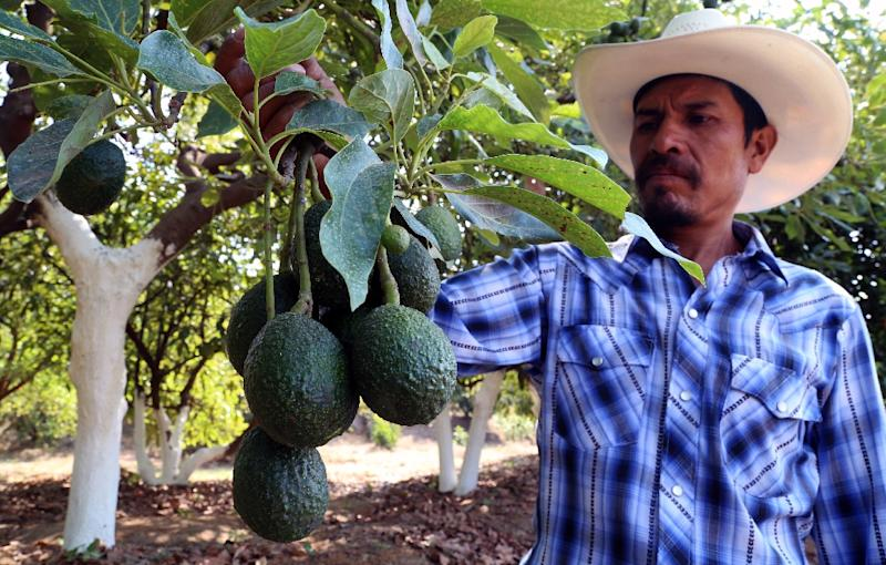 Avocados and tomatoes from Mexico would be the first products to feel the hit of new tariffs staring June 10 (AFP Photo/Jose CASTANARES)