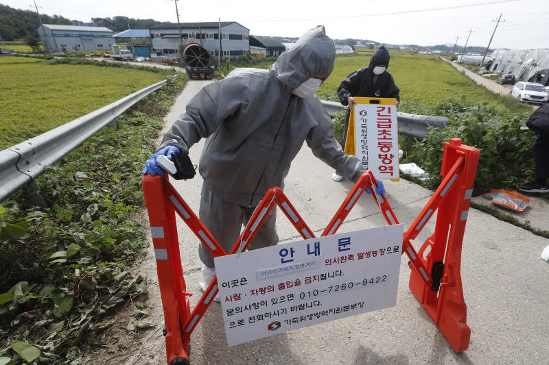"""Quarantine officials wearing protective gears place barricades as a precaution against African swine fever at a pig farm in Paju, South Korea, Tuesday, Sept. 17, 2019. South Korea is culling thousands of pigs after confirming African swine fever at a farm near its border with North Korea, which had an outbreak in May. The notice reads: """"Under quarantine."""" (AP Photo/Ahn Young-joon)"""