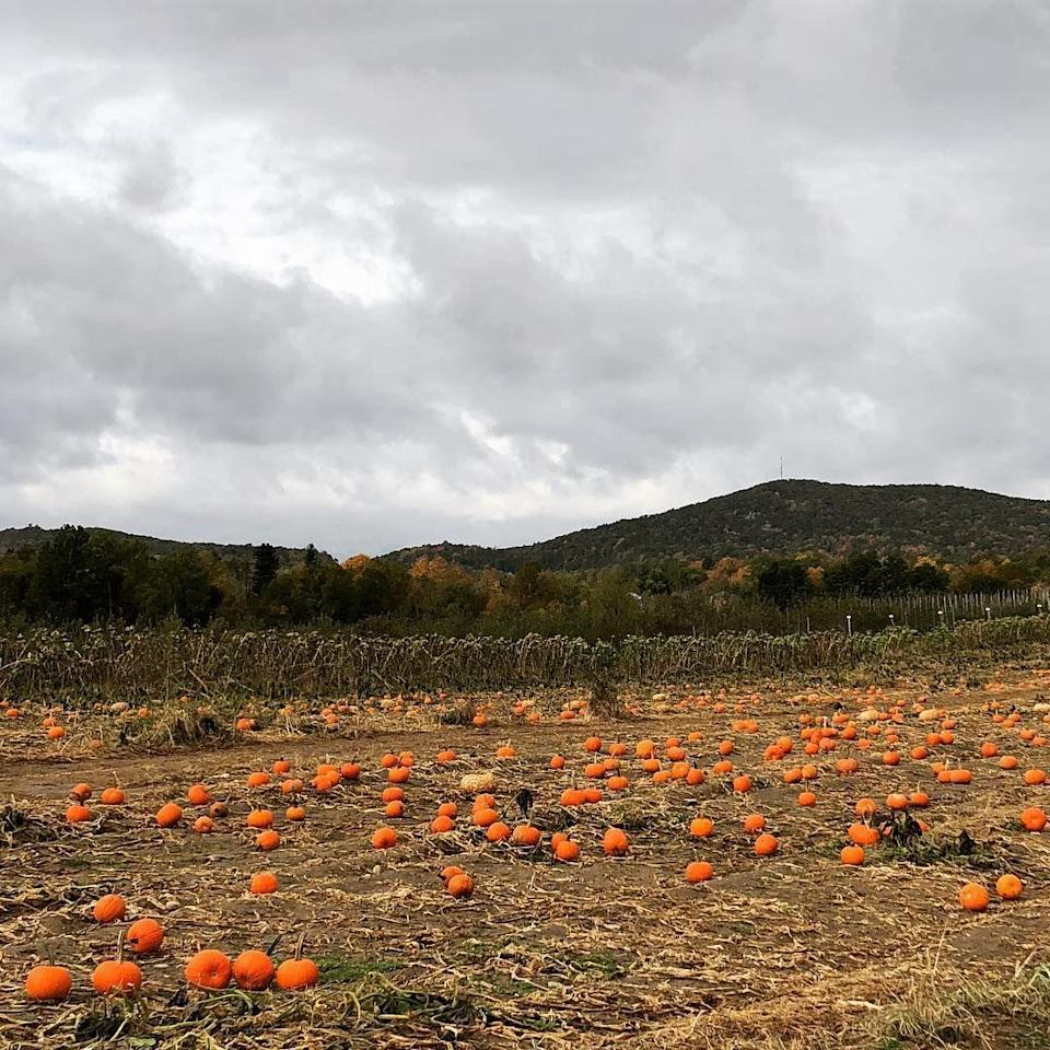 """<p>The pumpkins alone—entire fields of them—are worth the trek. But it's the fresh, hot cider that'll keep you coming back for more, not to mention the stunning views from the <a href=""""https://www.fishkillfarms.com/"""" rel=""""nofollow noopener"""" target=""""_blank"""" data-ylk=""""slk:back of the property"""" class=""""link rapid-noclick-resp"""">back of the property</a>.</p><p><a class=""""link rapid-noclick-resp"""" href=""""https://go.redirectingat.com?id=74968X1596630&url=https%3A%2F%2Fwww.tripadvisor.com%2FAttraction_Review-g47922-d4876895-Reviews-Fishkill_Farms-Hopewell_Junction_New_York.html&sref=https%3A%2F%2Fwww.countryliving.com%2Flife%2Ftravel%2Fg21273436%2Fpumpkin-farms-near-me%2F"""" rel=""""nofollow noopener"""" target=""""_blank"""" data-ylk=""""slk:PLAN YOUR TRIP"""">PLAN YOUR TRIP</a></p>"""
