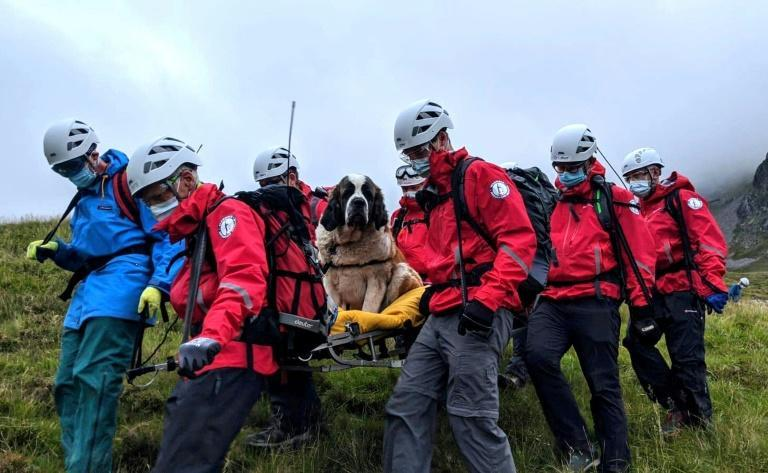 A handout picture released by Wasdale Moutain Rescue on July 26, 2020 shows volunteers carrying Daisy, a 55kg St Bernard dog down from Scafell pike, one of England's highest peaks near Grasmere in northwest England (AFP Photo/Handout)