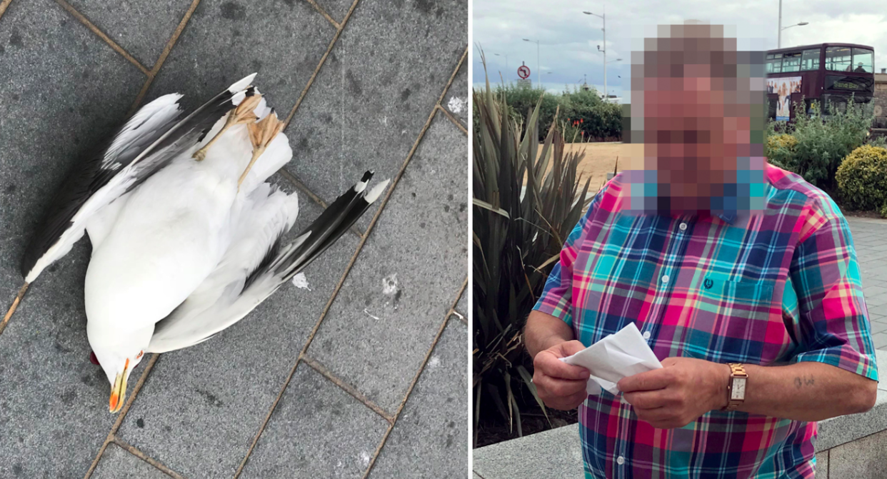 <em>The man smashed the seagull against a wall after it stole a chip (Caters)</em>
