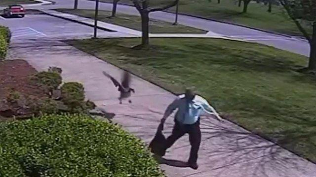 Angry goose attacks police officer in hilarious viral video