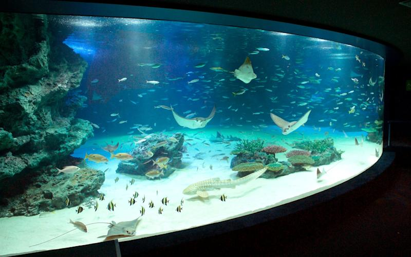 Stingrays and other fish swim in the