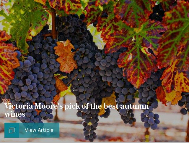 Victoria Moore's pick of the best autumn wines