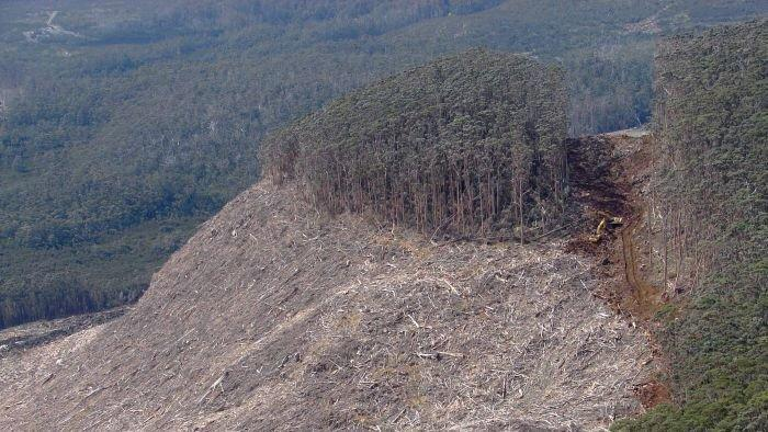Forest peace deal carbon credit warning