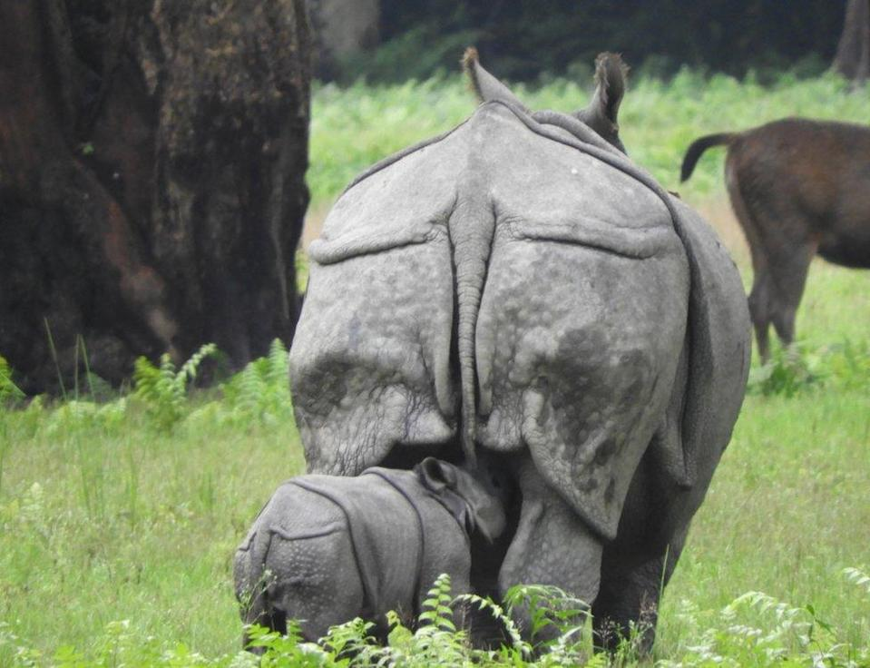 A mother rhino with her calf