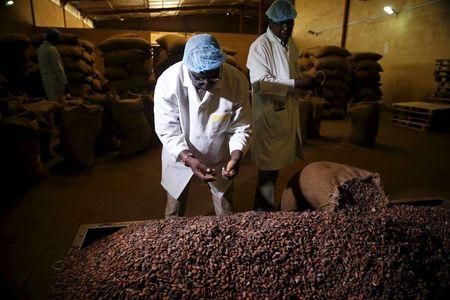 Factory officials take samples of cocoa beans at a cocoa processing factory in Ile-Oluji village in Ondo state, southwest Nigeria