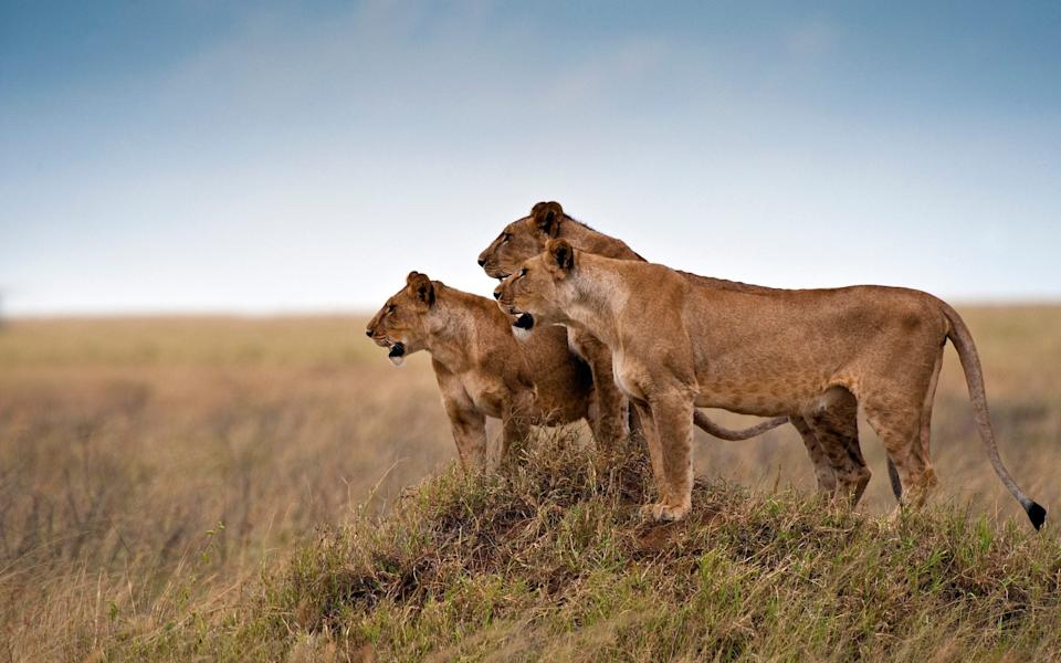 Serengeti National Park - getty