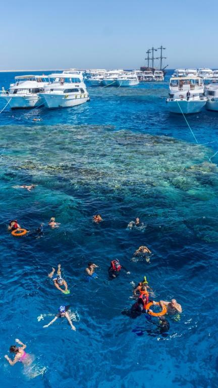 Tourists snorkel in the Red Sea above a coral reef near Egypt's Red Sea resort city of Sharm El-Sheikh at the southern tip of the Sinai peninsula (AFP/Khaled DESOUKI)