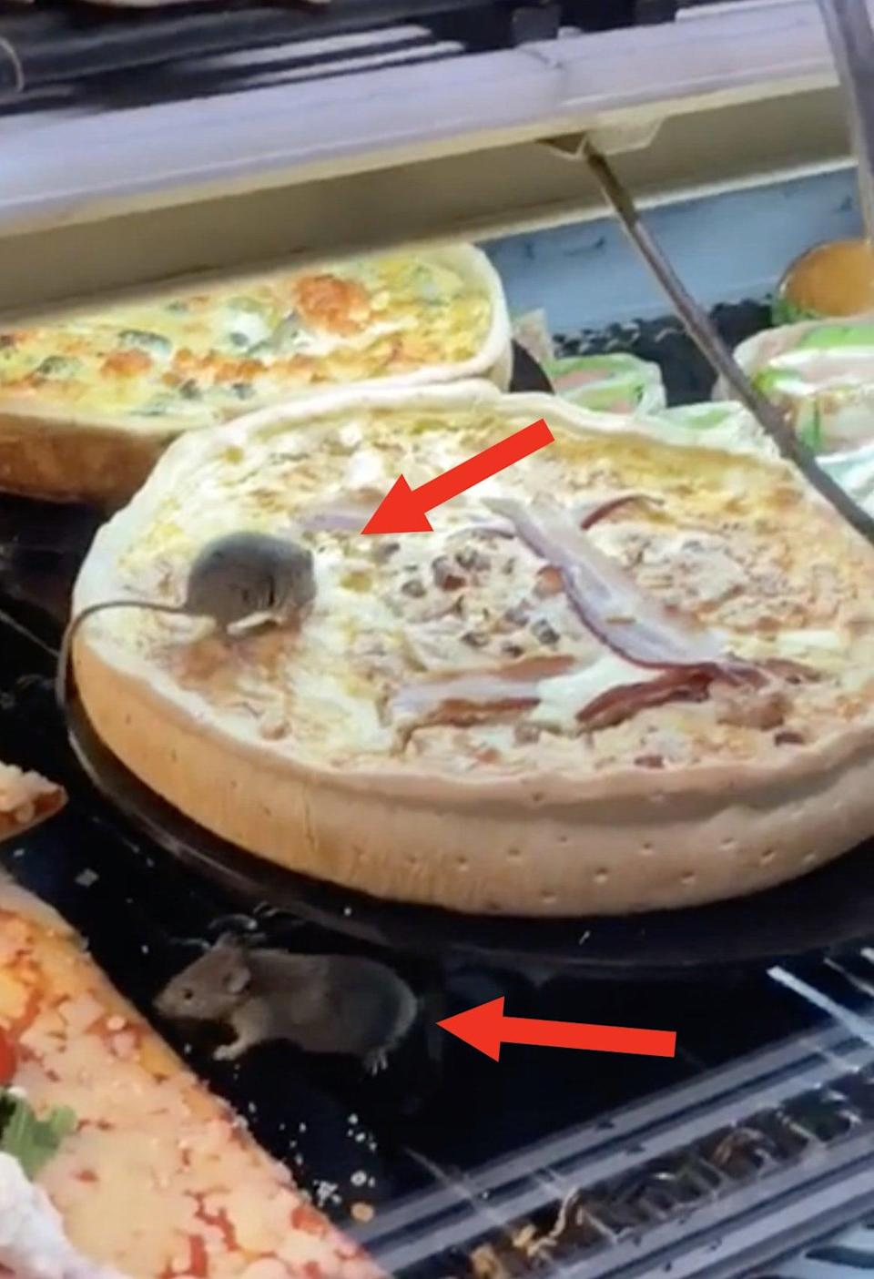 Rats are in a restaurant's display case, sitting on the pizzas