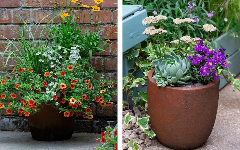 Feature pot ideas for summer, crafted by Loades - Neil Hepworth
