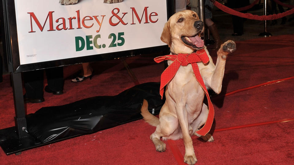 """Clyde attends the """"Marley & Me"""" premiere on December 11, 2008. (Photo by Lester Cohen/WireImage)"""
