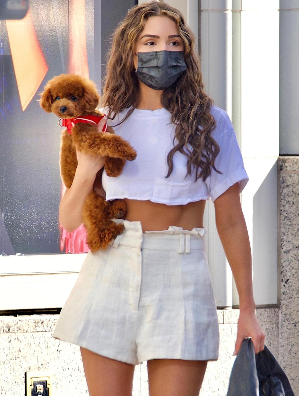 <p>Olivia Culpo totes her cute pooch while shopping in Beverly Hills on Thursday.</p>