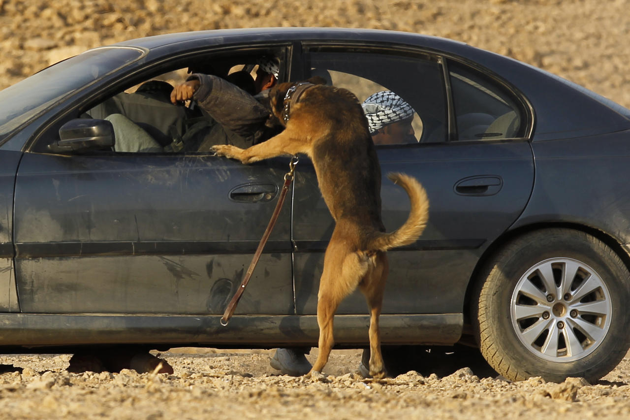 A military dog attacks a simulated opponent in a car during a combat skills demonstration by graduating soldiers from the Saudi special forces at a base near Riyadh June 27, 2011. REUTERS/Fahad Shadeed (SAUDI ARABIA - Tags: POLITICS MILITARY)